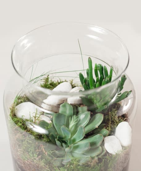 WORKSHOP WILD WOOD LONDON X ALLPRESS ESPRESSO TERRARIUM