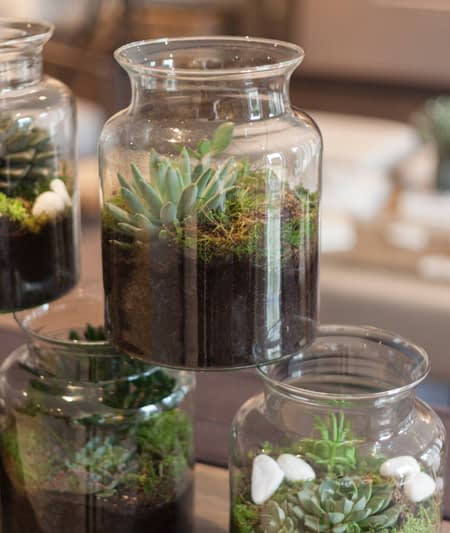 TERRARIUM WORKSHOP WILD WOOD LONDON