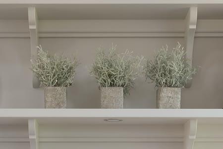 Mini Silverbush